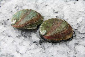 Abalone (Awabi), Live Sashimi Grade